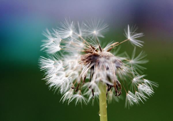 agile performance management blog image